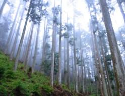 森下さんの森