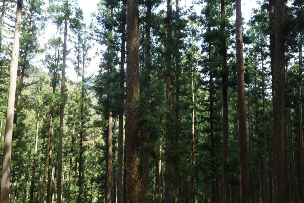 森下さんの森02